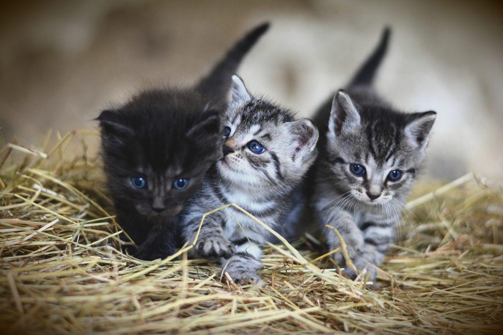 Katzen nicht stubenrein, Katzen Urin